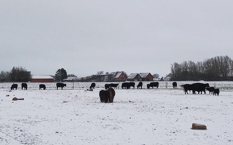 camping-nordjylland
